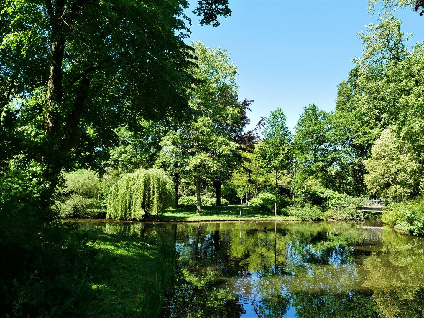 A pond surrounded by trees