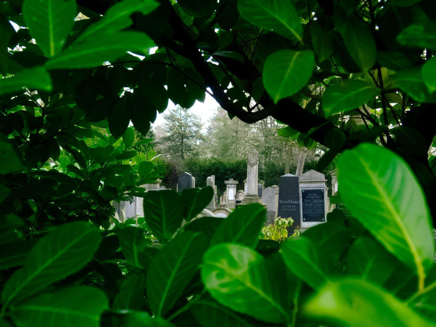 View through green foliage on gravestones