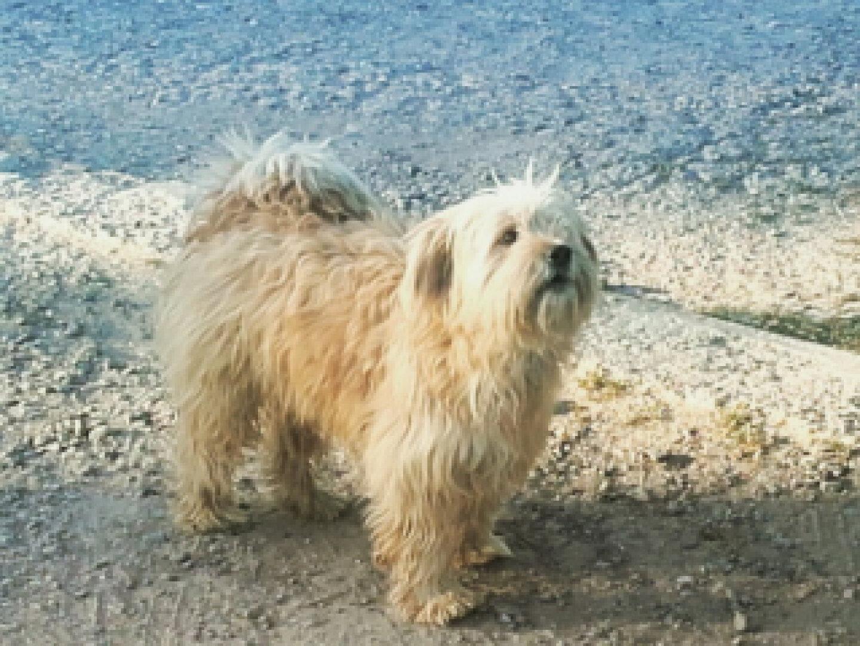 Perro. Dog. Puppy